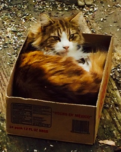 3/17/2015 - Small box, big cat, perfect fit. Simon lounging in the box of birdseed mix.