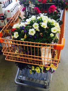 4/26/2015 - Home Depot basket, from the back.